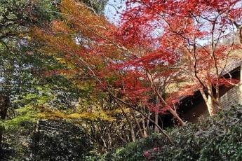 Japansk efterår