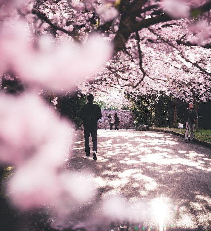 Japanske begivenheder og events i Danmark
